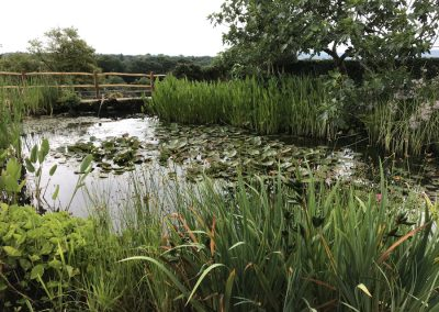 Mature pond plants - Petworth