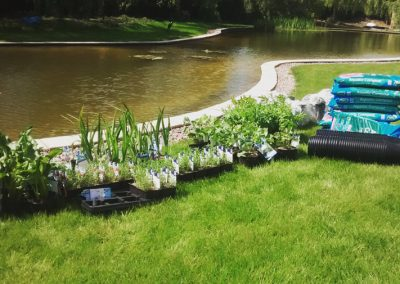 Ready to plant up pond - Ferring