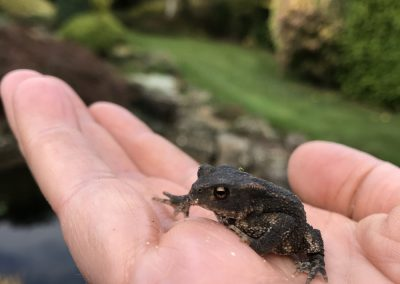 Toad from Goring Pond clean